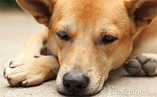 emmotion-dog